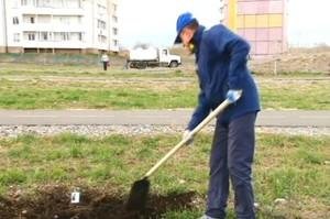 В Саяногорске начали озеленять дворы, парки и скверы