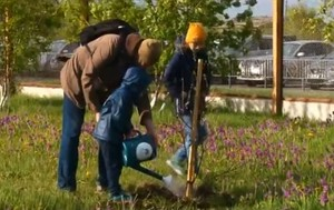 Вокруг Саяногорской больницы появился фруктовый сад