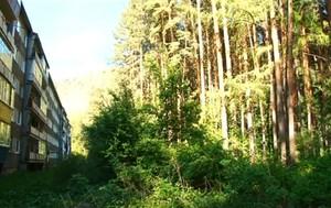 В Саяногорске и поселках будут удалять аварийные деревья