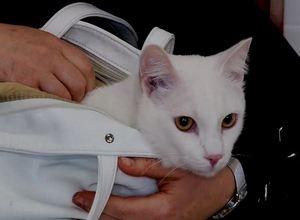 Ветврачи Саяногорска призывают вакцинировать животных от бешенства