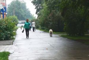 У Саяногорска появился подрядчик на отлов собак