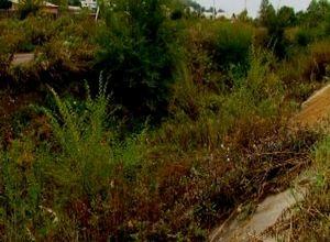 Вред экологии саяногорцы наносят сами