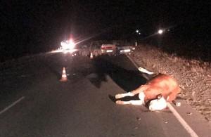 В Хакасии одна корова на дороге устроила массовое ДТП