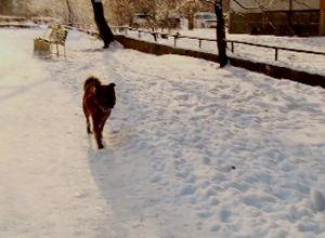 Вопросами бродячих собак в Саяногорске займется «Кот и пес»?!