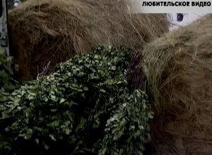 Охотники Саяногорска встали на защиту диких животных