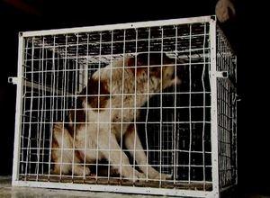 Отловщики бродячих собак в Саяногорске делают упор на школу №6